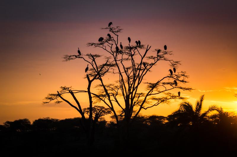 Marabus amanecer